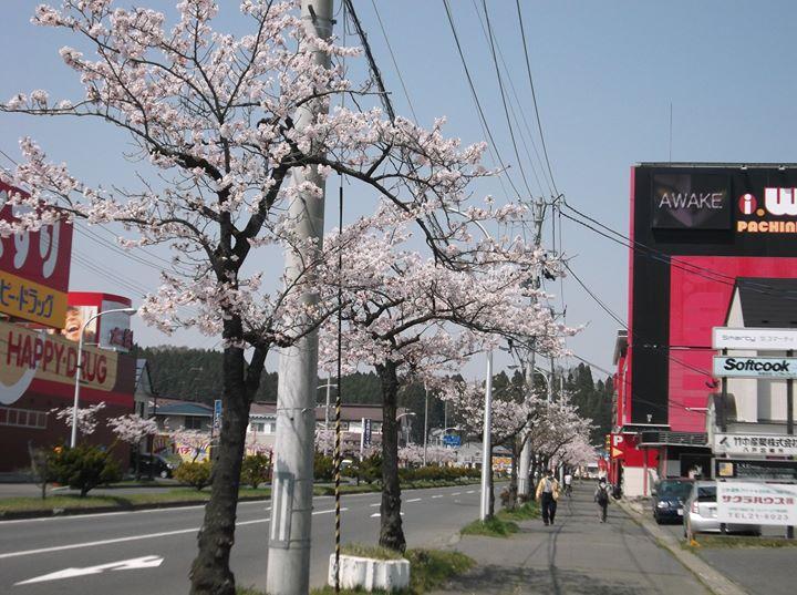 桜は今が見ごろお見逃しなく✨